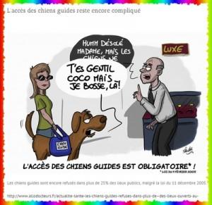 Les droits des chiens d'assistance et de leurs accompagnants dans Animaux chienguidenawak-300x291