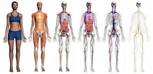 Zygote Body recommandé par http://toutoblog.unblog.fr