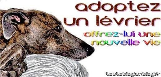 adoptez un lévrier - toutoblog.unblog.fr