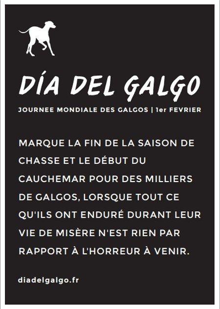 Dia Del Galgo via toutoblog.unblog.fr