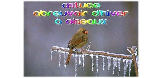 Astuce Abreuvoir Hiver sur toutOblog