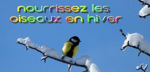 Nourrir les oiseaux l'hiver - toutoblog.unblog.fr