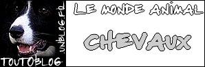 Les chevaux sur toutoblog.unblog.fr
