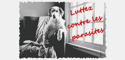 luttez contre les parasites - toutoblog.unblog.fr