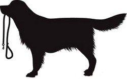 Le chien est toujours partant pour vous suivre - toutoblog.unblog.fr