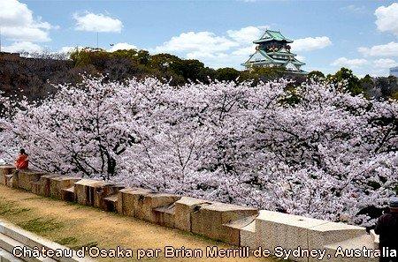 Cerisiers en fleurs au Château d'Osaka