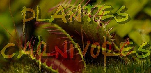 Bourse d'échange et exposition de plantes carnivores