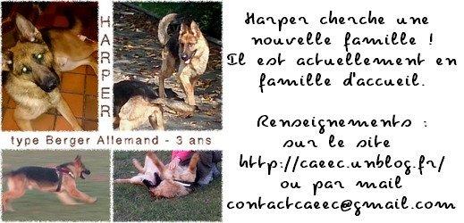Harper cherche une nouvelle famille - CAEEC - via #toutoblog.unblog.fr