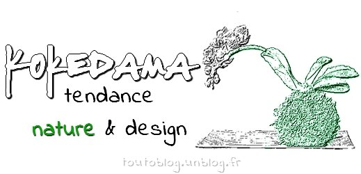 Kokedama via #toutoblog.unblog.fr