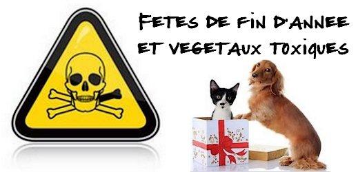 Fêtes de fin d'années et végétaux toxiques sur #toutoblog.unblog.fr