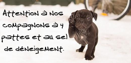 Attention au sel de déneigement pour les chiens et chats - #toutoblog.unblog.fr