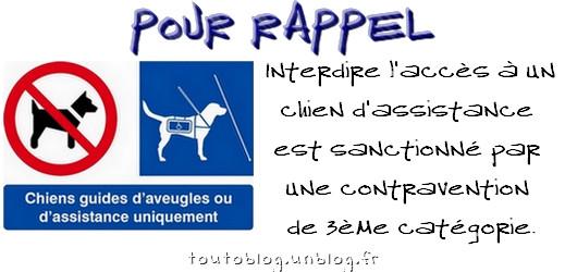 #ChiensGuidesdAveugles #Pictogramme via #toutoblog.unblog.fr