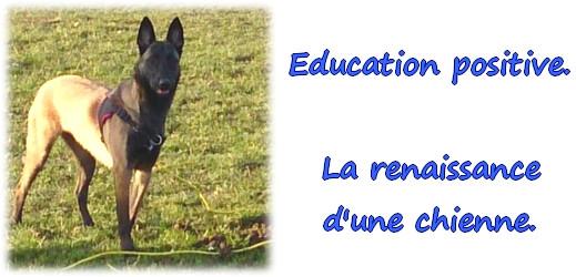 #caeec.unblog.fr – Education positive – La renaissance d'une chienne