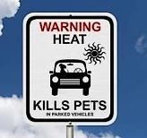 Ne laissez pas vos chiens dans les voitures quand il fait chaud ! #toutoblog.unblog.fr
