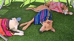 Rafraîchissez les chiens quand il fait trop chaud ! #toutoblog.unblog.fr