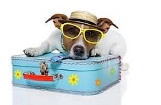 Vacances avec son chien via #toutoblog.unblog.fr