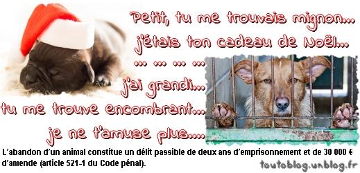 Un animal n'est pas un cadeau jetable !